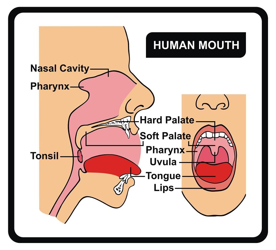 Tonsilolitos: causas y posibles tratamientos