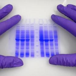 Conoce sobre las Pruebas de Paternidad ADN